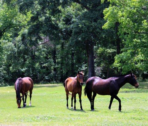 coldspring horses