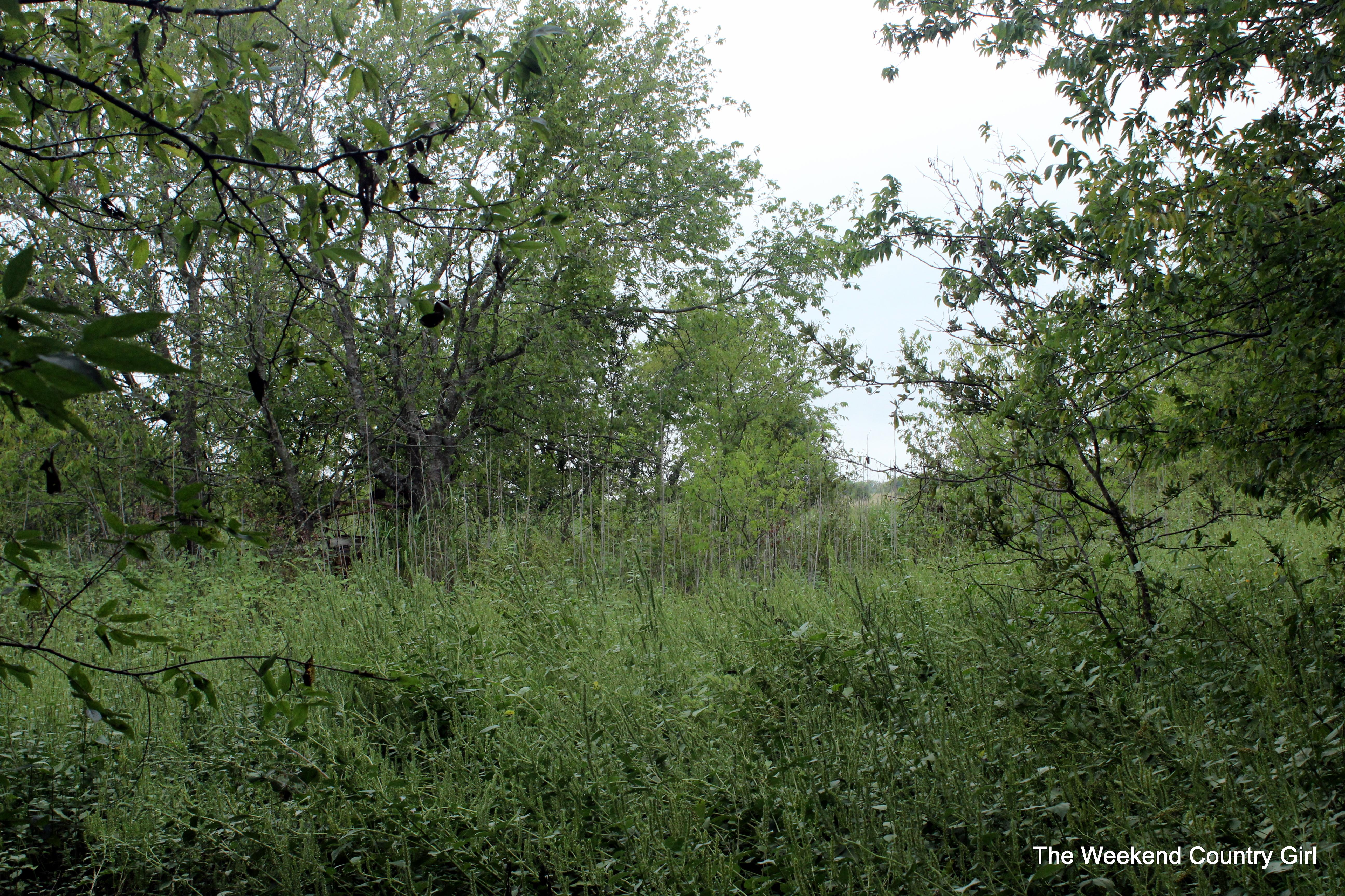 overgrown farm