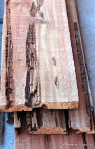 cedar wormy close up