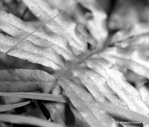 bw fern