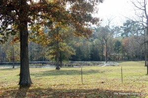 Robinson plantation